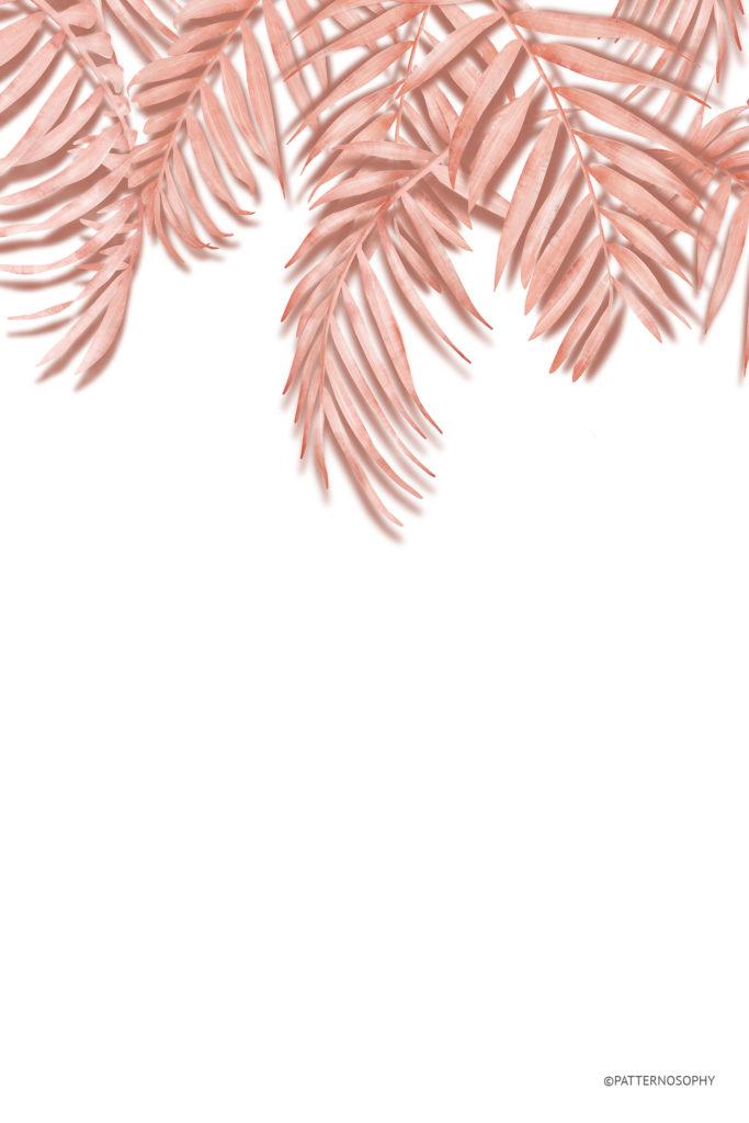 fototapeta w palmy, fototapeta w liście,fototapeta tropikalna